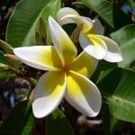 Курс по Хавайски ЛомиЛоми Маури Масаж